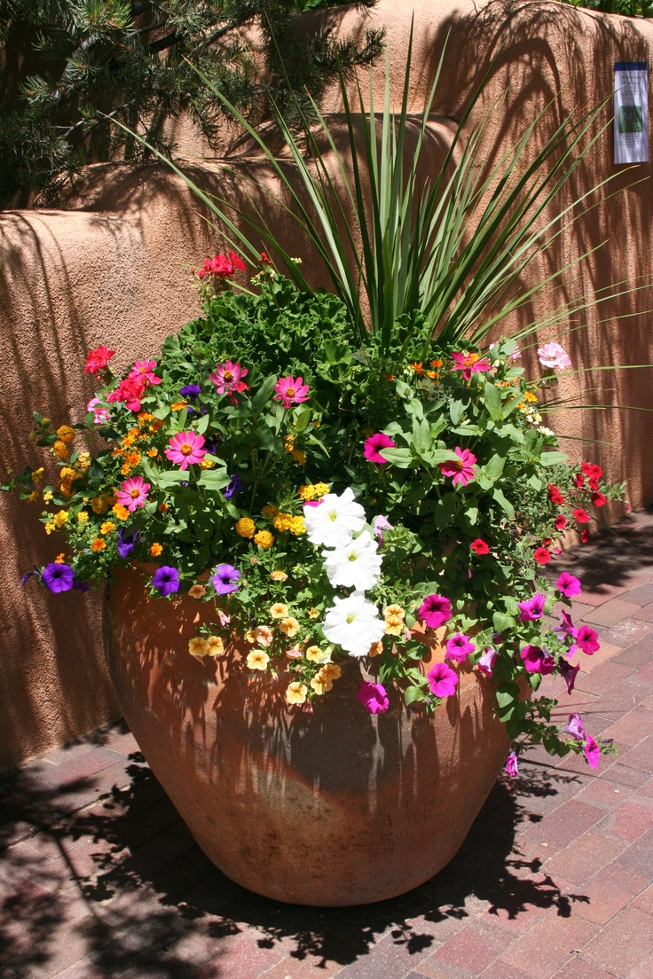 Full sun taos pot gardening container pinterest - Container gardens for sun ...