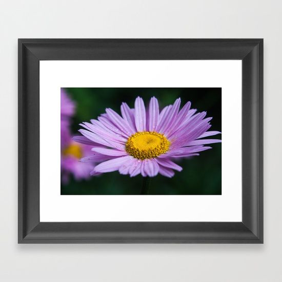 Violet daisy Framed Art Print society6, gifts, shopping, buy, sell, digital, color, nature, floral, flower, daisy, violet, lilac, purple, yellow, single, one, drops, dew, wall art, artwork, print
