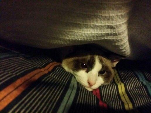 #cat #hidden