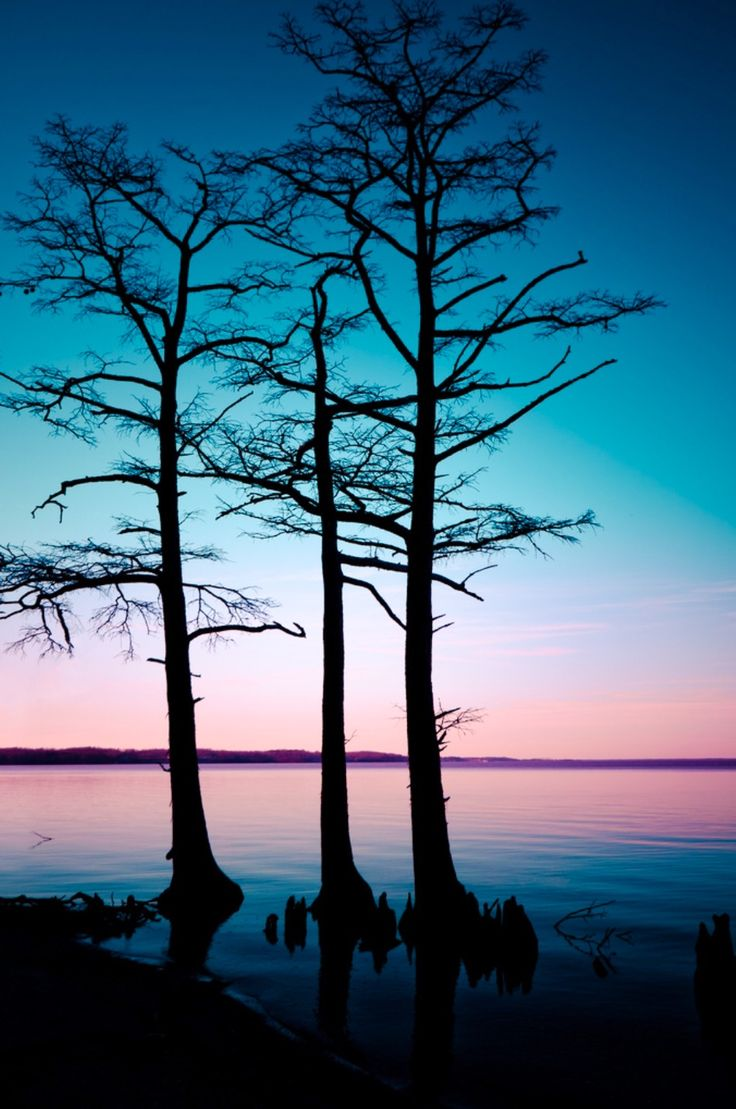 ***Cypress trees at sunset (Virginia) by Bill Dickinson