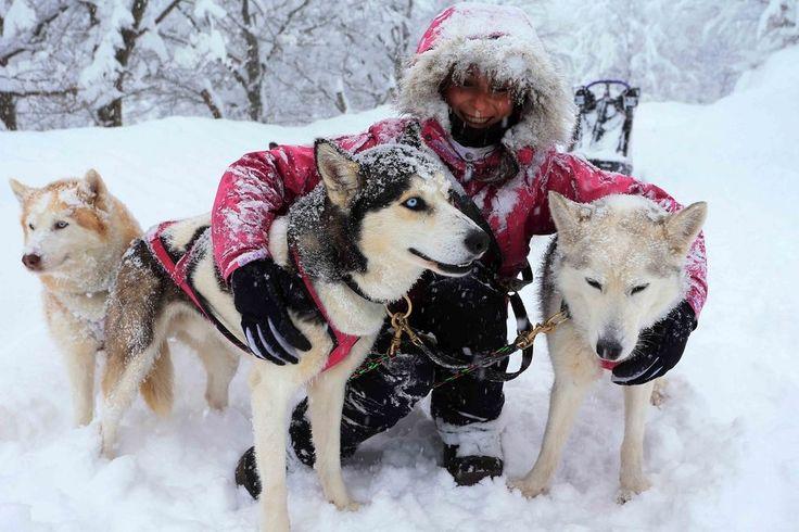Balla coi lupi, i cani da slitta sfrecciano sulla neve a Villa Minozzo - Foto e video - Gazzetta di Reggio