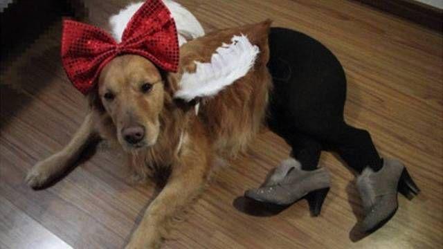 Cachorro usa meia-calça e sapatos em foto postada na internet