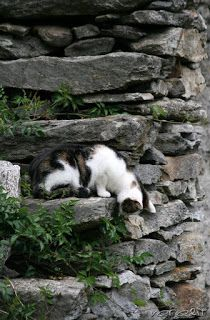 the spider dozing and waiting - the cat too      veredit©isabella.kramer17