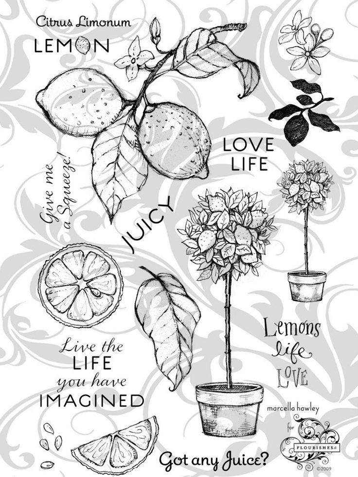 41 best Stamps To Buy images on Pinterest   Stamping, Beauty ...