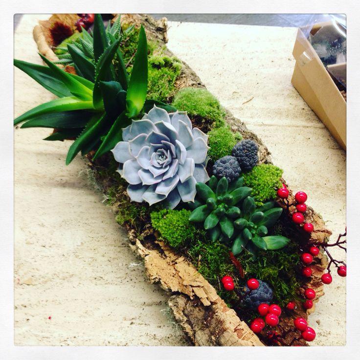 Composizione con sughero, muschio e succulente by Fioreria Sarmeola