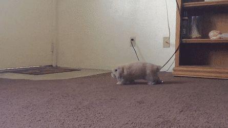 It's amazing watching my girlfriend's new bunny play http://ift.tt/2lRhJty