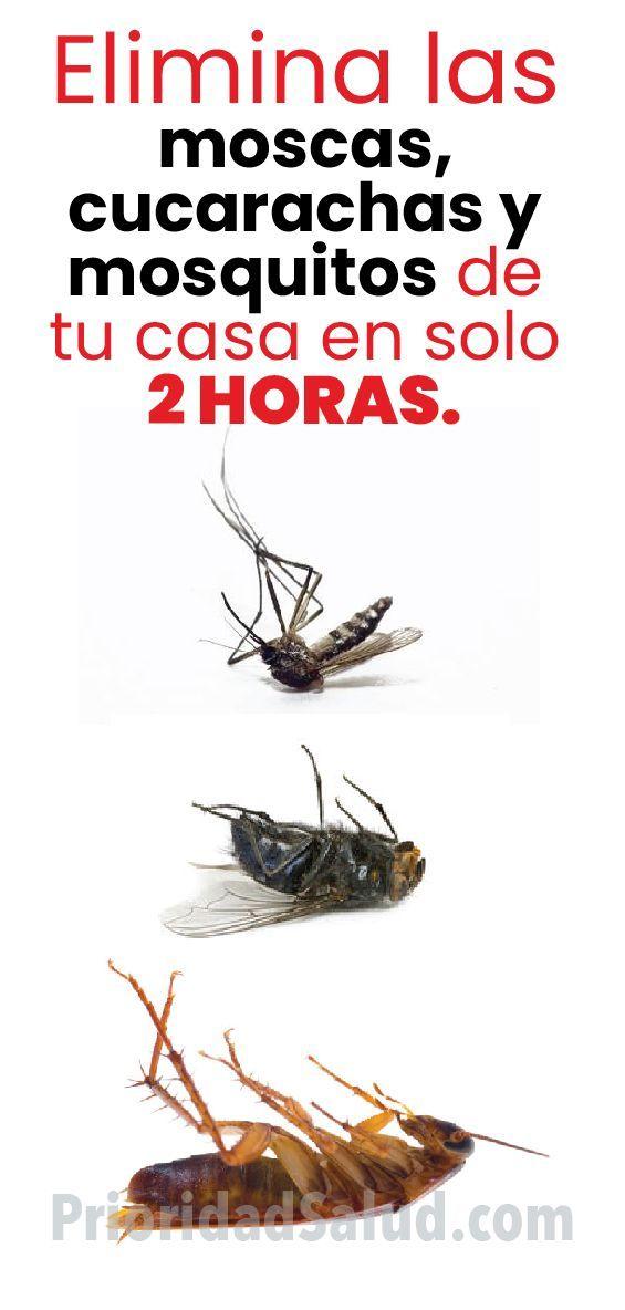 Elimina Las Moscas Cucarachas Y Mosquitos De Tu Casa En Solo 2 Horas Remedios Para Cucarachas Como Eliminar Mosquitos Eliminar Las Moscas