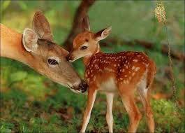 bebek hayvanlar ile ilgili görsel sonucu