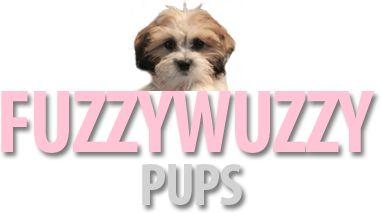 OFFICIAL WEBSITE OF FUZZY WUZZY PUPS!!!! Shi chon Zuchon Puppies for Sale, zuchon breeder, shichon breeder
