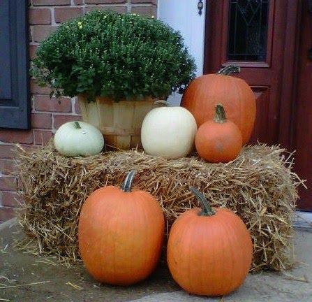 Mum and pumpkins