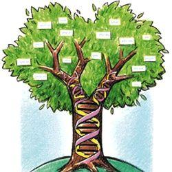 Généalogie: sites et outils pour faire votre arbre généalogique
