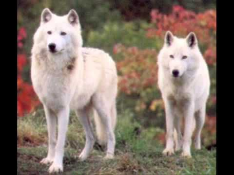 ▶ Nightwish - 7 Days to the Wolves - YouTube