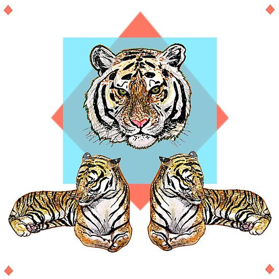 3Tigerz on Blue & Red #redbubble #tiger #animal drawing