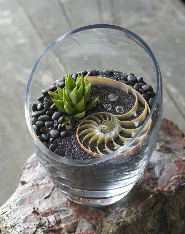 Golden spiral tiny terrarium with free PDF how-to  #DIY #craft #plant