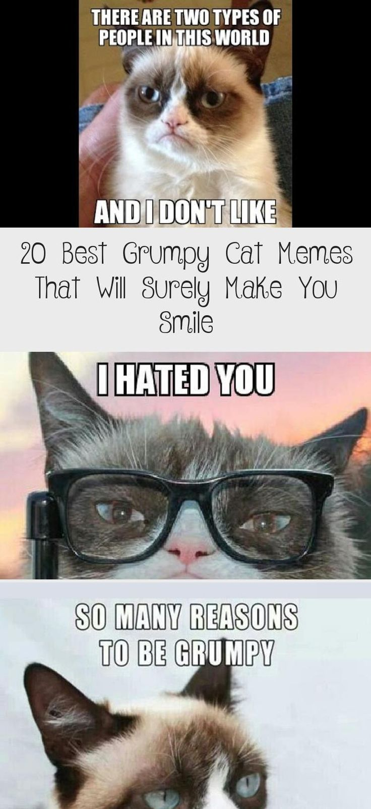 20 Best Grumpy Cat Memes That Will Surely Make You Smile