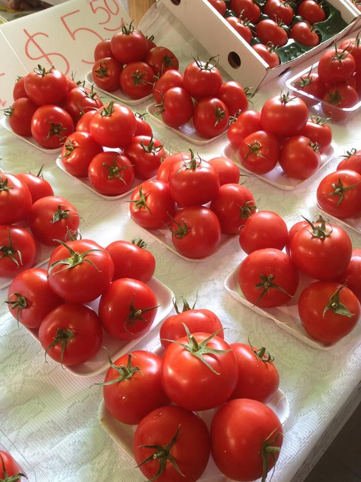 """Esther and Carlos have just picked a new crop of hydroponic tomatoes for their """"Taste the Difference"""" stall at Marina Mirage Farmers Markets. www.marinamirage.com.au"""