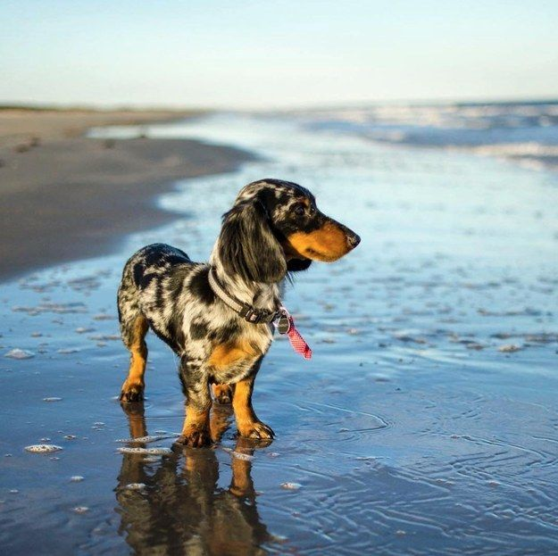 How many wieners have you seen that are more handsome than this hunk? | Community Post: 13 Reasons Why You Need A Hairy Wiener In Your Life