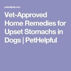 Vet-Approved Home Remedies for Upset Stomachs in Dogs | PetHelpful