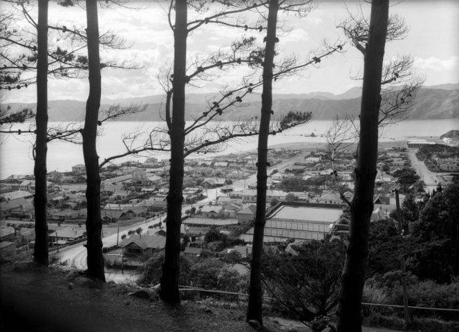 Looking through pine trees, over the suburb of Seatoun, Wellington