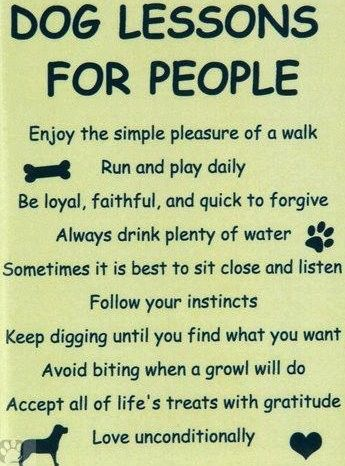 You just watch. . . .when we all get to Heaven you'll see that Dogs have always had the Universal wisdom after all.