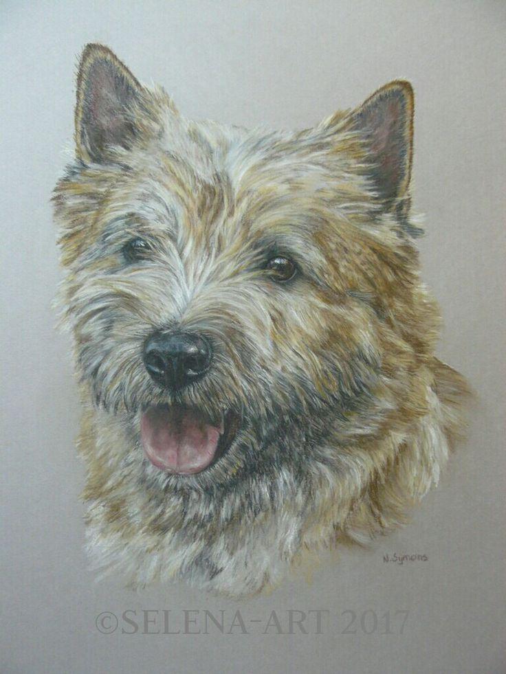 Pasteltekening Cairn Terrier Basiel www.selena-art.nl