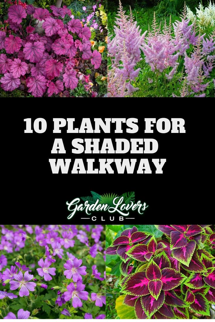 10 Plants For A Shaded Walkway Shade Garden Plants Shade