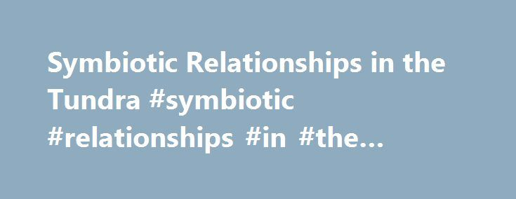 Symbiotic Relationships in the Tundra #symbiotic #relationships #in #the #tundra http://el-paso.remmont.com/symbiotic-relationships-in-the-tundra-symbiotic-relationships-in-the-tundra/  # Symbiotic Relationships in the Tundra Classification Symbiotic relationships are classified into three types: (i) mutualistic, (ii) commensalistic, and (iii) parasitic. They say that all species are dependent on each other for survival, which is aptly depicted in the food chain as well as the food web the…