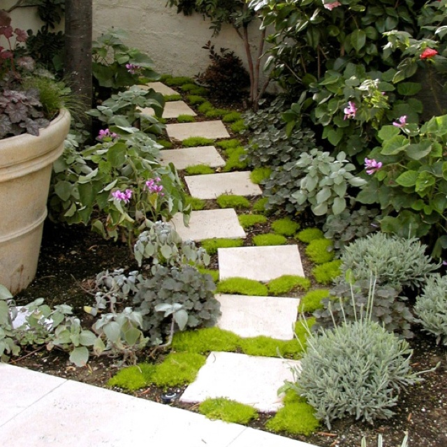 Landscaping With Irish Moss : Best images about az front yard on