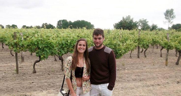 Vineyard in Cognac France