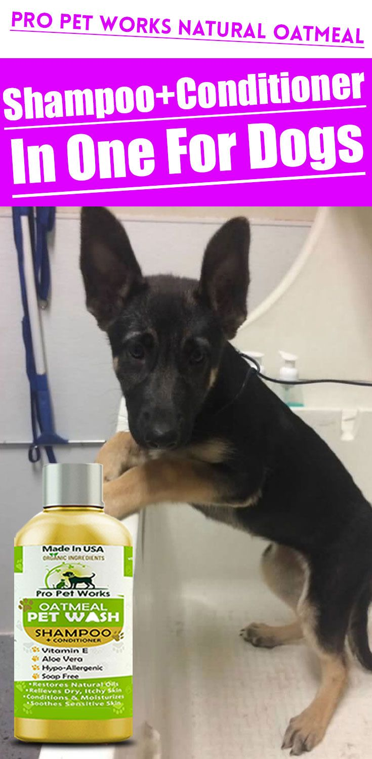 Natural Oatmeal Shampoo Conditioner In One For Dogs Cats In 2020