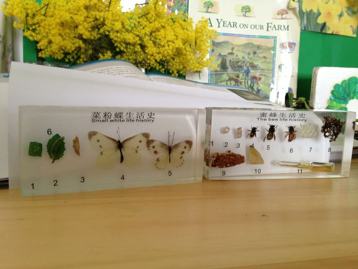 Butterfly and Bee lifecycle resin blocks.