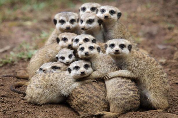 Group hug ❤️❤️