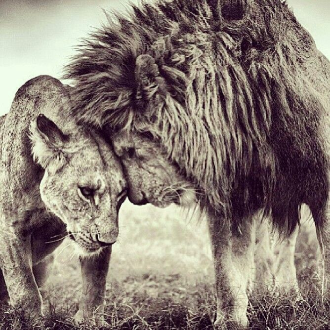 What's a KING without his QUEEN?