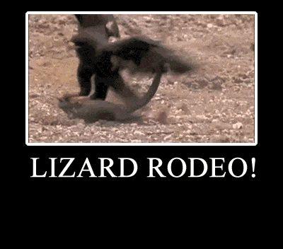 cf2ac4b2a488835976949f944b5e290f jpgFunny Lizard Jokes