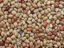 horse gram for weight loss, horse gram diabetes , horse gram sperm, horse gram ayurveda, horse gram health benefits