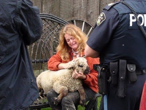 Farmed and Dangerous??— CFIA destroys shepherds life and sheep