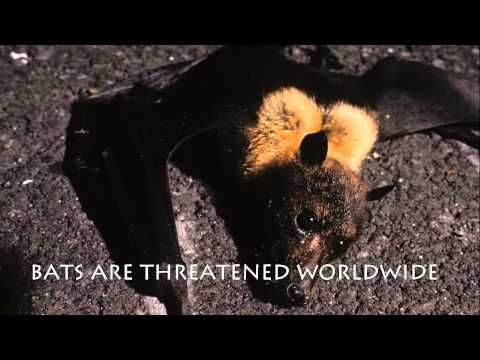 We Need Bats & Bats Need Us - Bat Conservation International