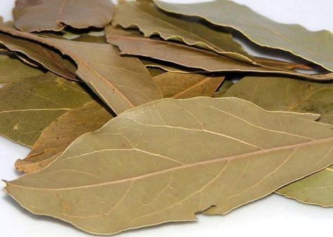 Leacuri la îndemână cu FRUNZE de DAFIN contra bolilor iernii - Top Remedii Naturiste