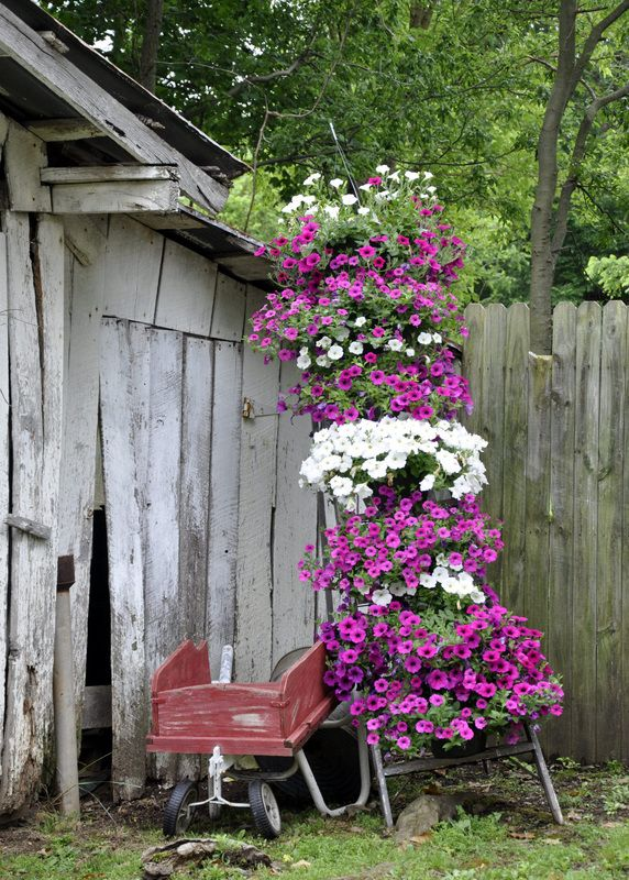 Ladder planter at The Garden Patch - Pelly Farm
