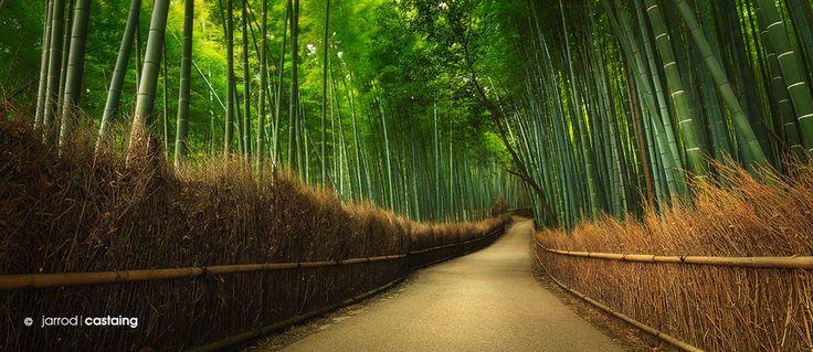 Bamboo Grove --- Bamboo forest near Tenryu-ji Temple in Kyoto, Japan.