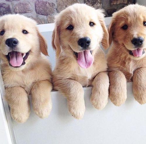 dog, puppy, cute, animal y adorable