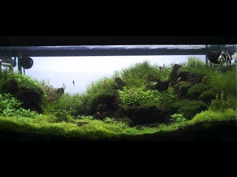 119 Best Images About Cube For Shrimp On Pinterest Fish Tanks Artificial Plants And Shrimp