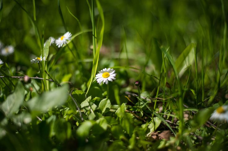 Wild flowers by Kisun Pokharel on 500px