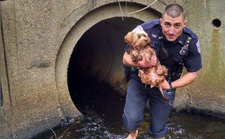 Ce policier se faufile dans les égouts pour sauver un petit chien apeuré