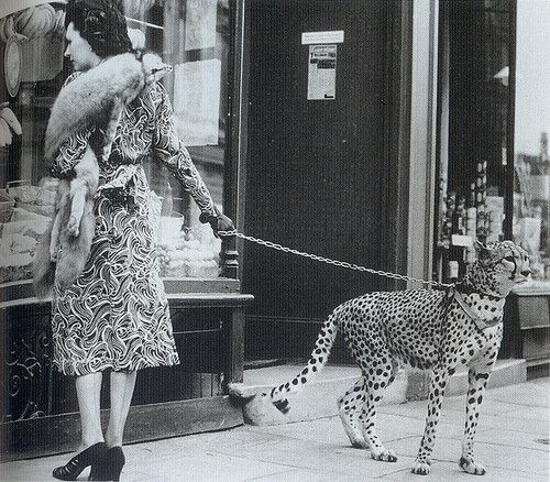 Actress Phyliss Gordon out shopping with her pet cheetah, 1939.