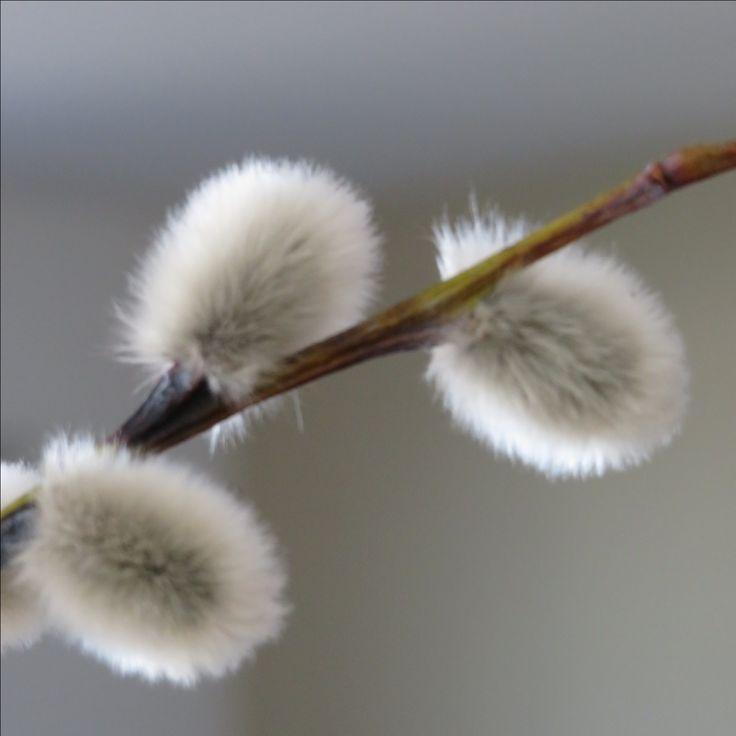 Wohnbrise: Natur, Frühling