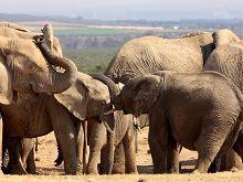Addo Elephant National Park   Eastern Cape. South Africa.