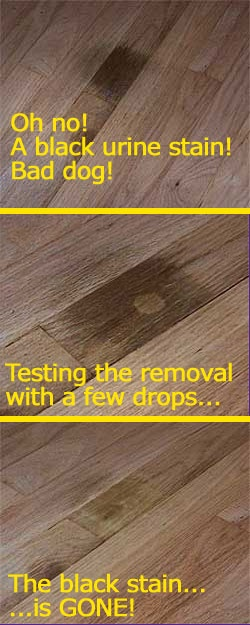 Best 25 Urine Stains Ideas On Pinterest Skunk Removal