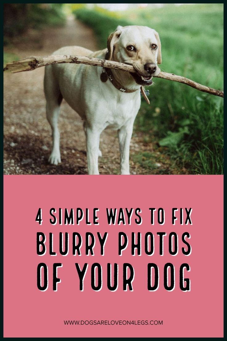4 Simple Ways To Fix Blurry Photos Of Your Dog | Dog, Dog Photography, Dog Photos, Photography Tips