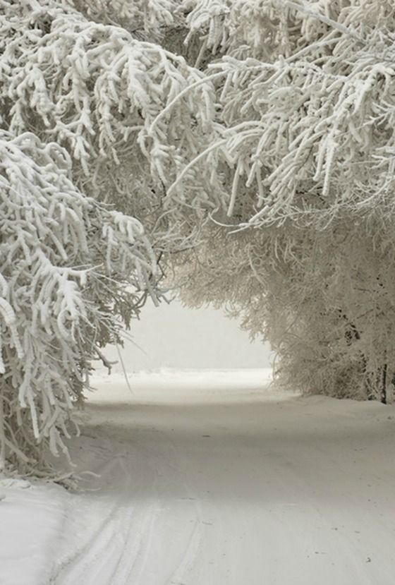 """I wonder if the snow loves the trees and fields, that it kisses them so gently"" - Lewis Carroll"